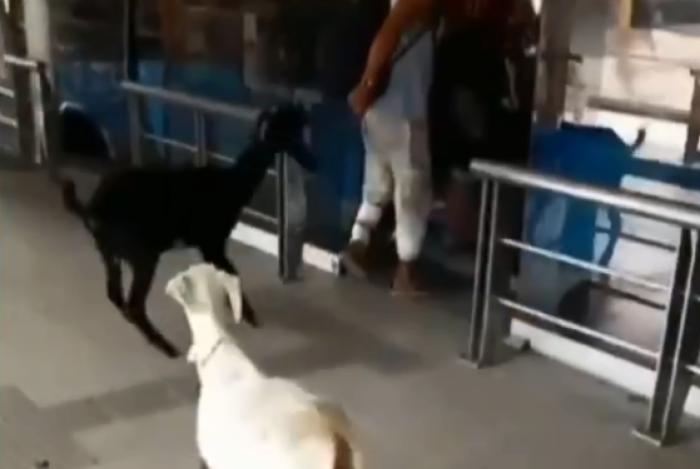homem subiu a plataforma com dois animais