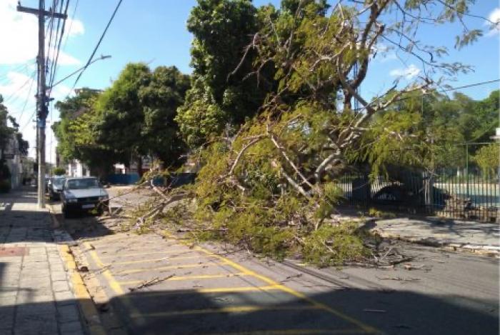 Uma grande árvore caiu no Jardim São Benedito no início desta tarde, atrapalhando o trânsito na região