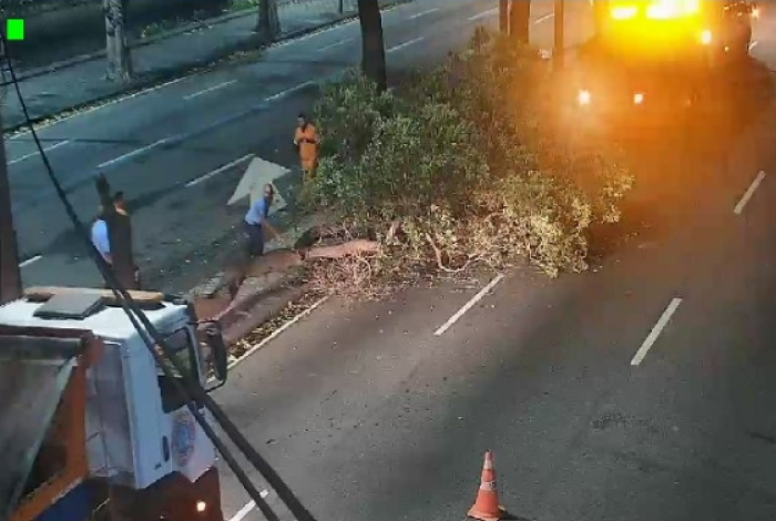 Chuva derruba árvore na Avenida Presidente Vargas